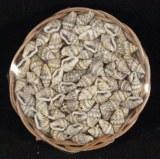 Petites coquillages Nassa, corbeille 50g,naturel