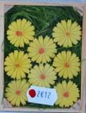 Paquerettes en polyresine, 2 cm, boite 16 pces, jaune