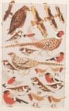 Piece decoupee au laser Oiseaux, sct.-LS 1 coupon, 5,5x7,5 cm, blanc